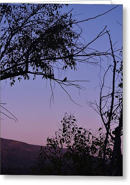 Purple Sunset With Tree And Bird Silhouette Greeting Card by Linda Brody