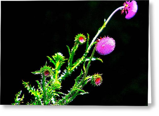 Flora Artwork Greeting Cards - Purple Thorn Greeting Card by Robert Pearson
