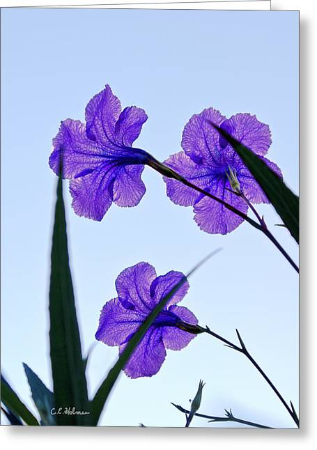 Purple Trio Greeting Card by Christopher Holmes