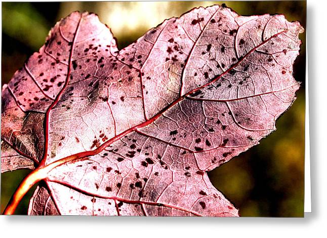 Purple Vein Greeting Card by Karen M Scovill