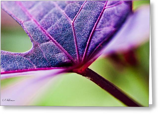 Purple Veins Greeting Card by Christopher Holmes