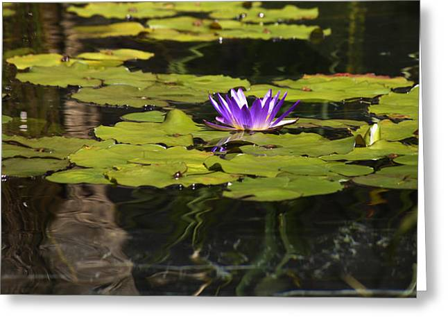Lilly Pad Greeting Cards - Purple Water Lilly Distortion Greeting Card by Teresa Mucha