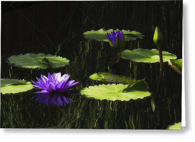 Nature Center Pond Greeting Cards - Purple Water Lily Greeting Card by Lindley Johnson