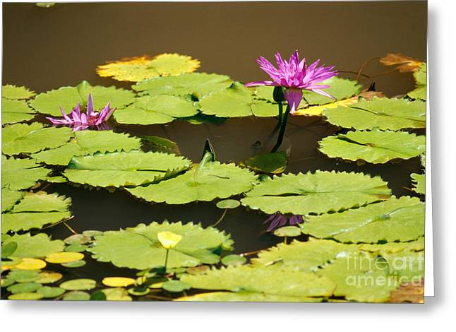 Waterlily Stamen Greeting Cards - Purple Water Lily Greeting Card by Mary Van de Ven - Printscapes