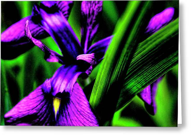 Snapdragons Greeting Cards - Purple Wildflower Greeting Card by David Patterson