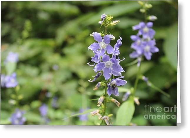 Missouri Purple Wildflower, Tall Bellflower Greeting Card by Adam Long