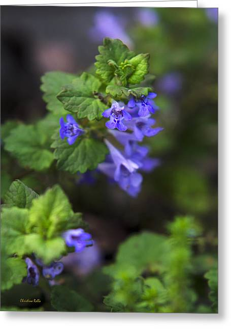 Garden Grown Photographs Greeting Cards - Purple Wildflowers - Ground Ivy Greeting Card by Christina Rollo