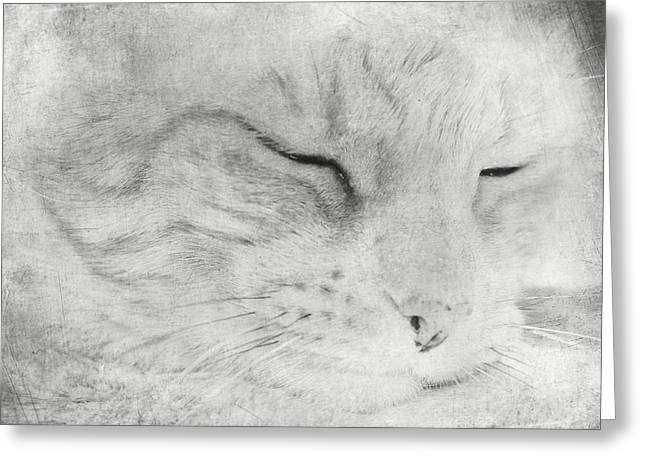 Content Greeting Cards - Purrr Greeting Card by Constance Fein Harding