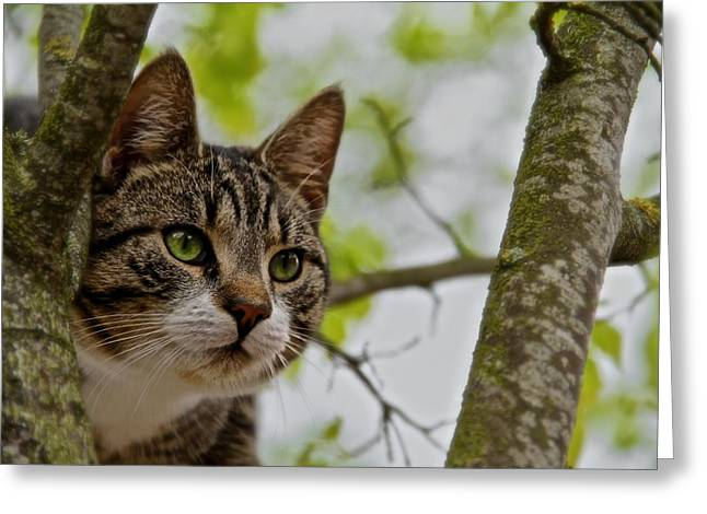 Farm Cat Greeting Cards - Puss n Tree Greeting Card by Odd Jeppesen
