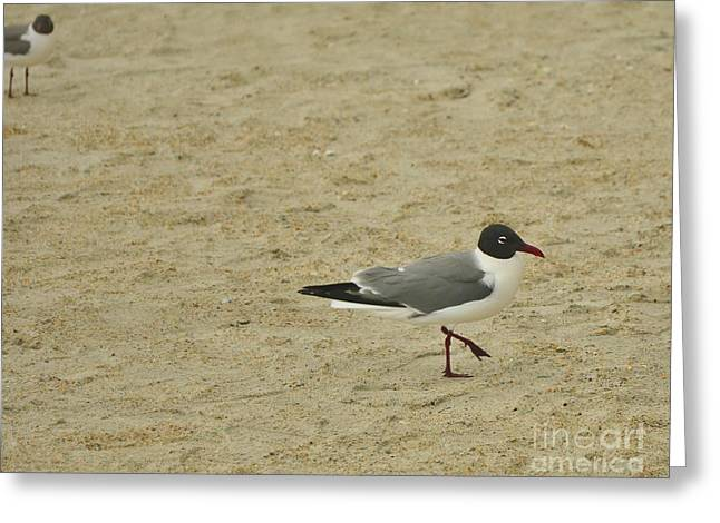 Tern Greeting Cards - A Sea Gull Putting His Best Foot Forward Greeting Card by Bob Sample