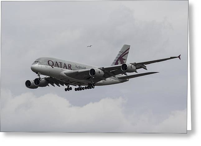 A380 Greeting Cards - Qatar Airlines Airbus And Seagull Escort Greeting Card by David Pyatt
