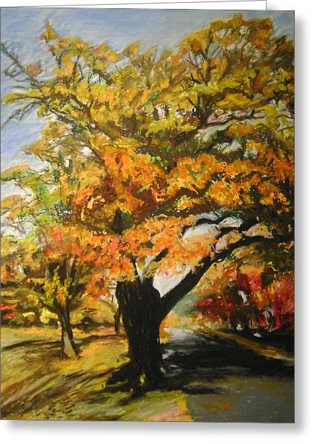 Quabbin Tree Greeting Card by Therese Legere