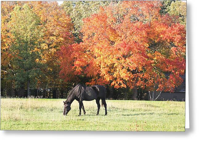 Quarter Horses Greeting Cards - Quarter Horse Grazing in the Fall Greeting Card by Laurie With
