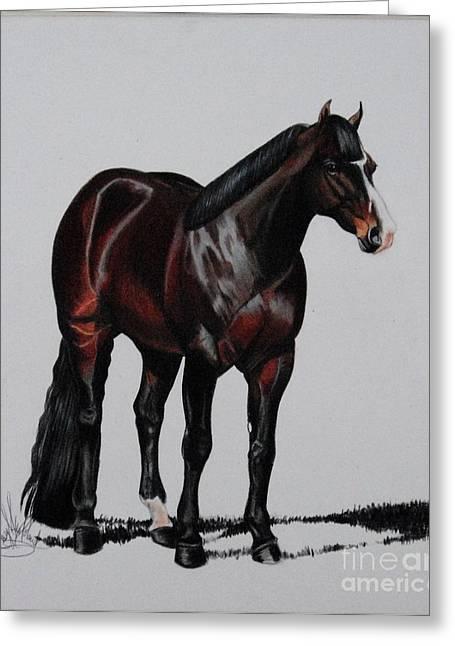Quarter Horses Drawings Greeting Cards - Quarter Horses in Color Pencil Greeting Card by Cheryl Poland