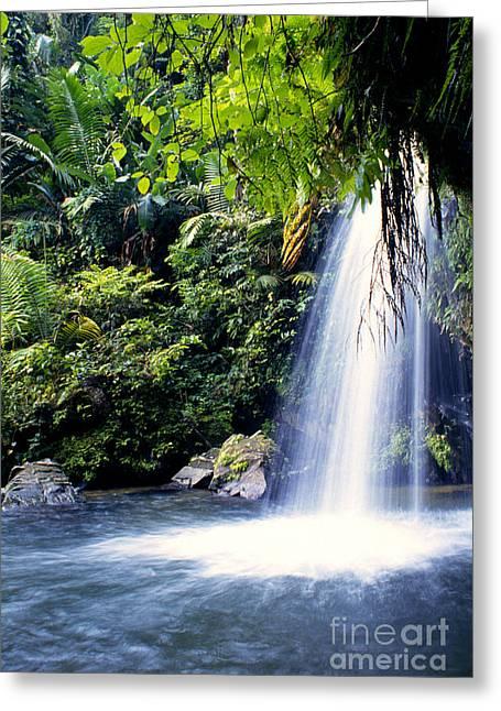 Puerto Rico Photographs Greeting Cards - Quebrada Juan Diego Waterfall Greeting Card by Thomas R Fletcher