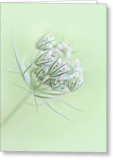 Daucus Greeting Cards - Queen Annes Lace Flower Buds Greeting Card by Jennie Marie Schell