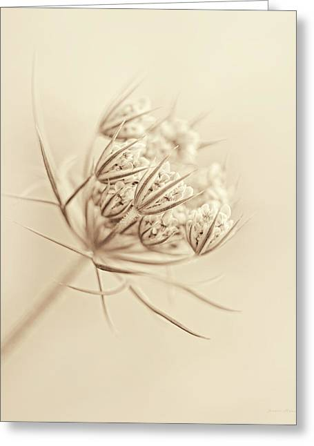 Daucus Greeting Cards - Queen Annes Lace Flower Buds Sepia Greeting Card by Jennie Marie Schell