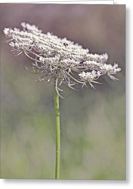Daucus Greeting Cards - Queen Annes Lace Wild Flower Plum Greeting Card by Jennie Marie Schell