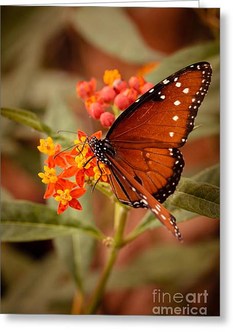 Queen Butterfly On Flowers Greeting Card by Ana V  Ramirez