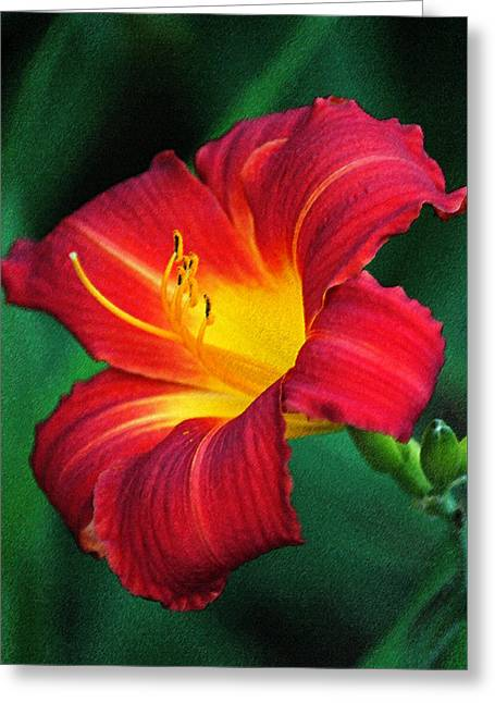 Queen Charlotte Daylily In Pastel Greeting Card by Suzanne Gaff