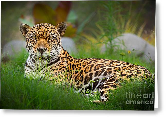 Jaguars Greeting Cards - Queen of the Jungle Greeting Card by Jamie Pham