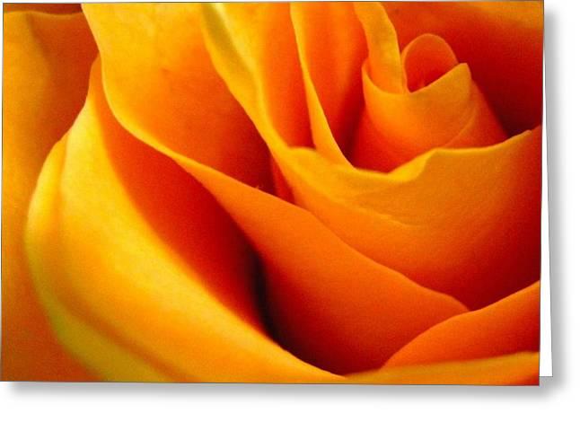 Queen Rose Greeting Card by Rhonda Barrett
