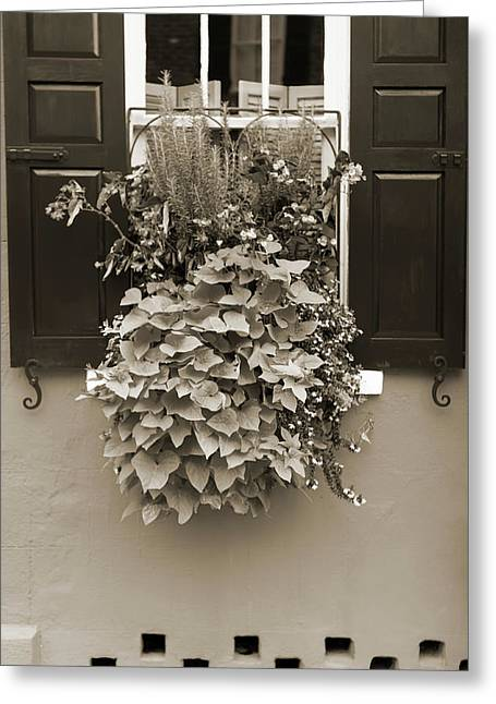 Basket Pot Greeting Cards - Queen Street Flowers Charleston SC Greeting Card by Dustin K Ryan