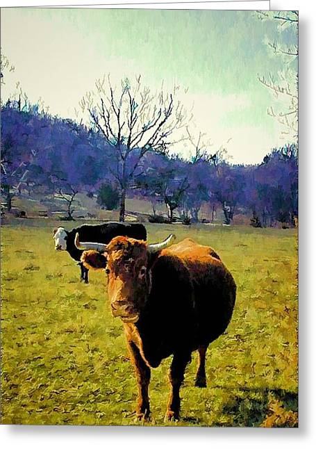 Tennessee Farm Digital Greeting Cards - Quick Glance Greeting Card by Jan Amiss Photography