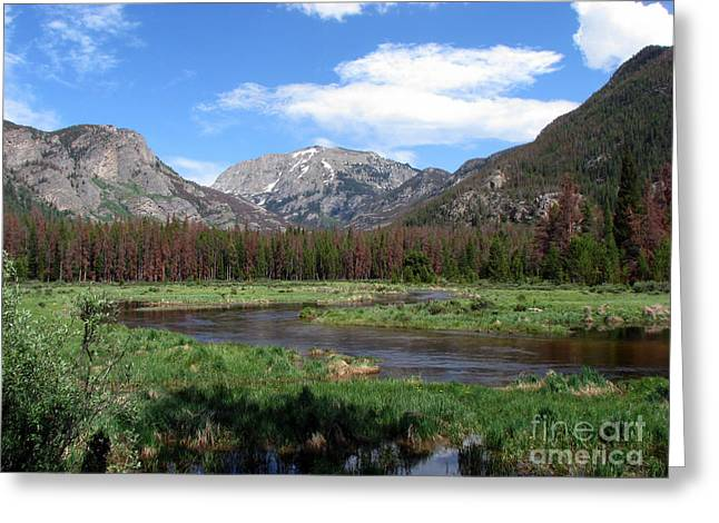 Nature Scene Digital Art Greeting Cards - Quiet Greeting Card by Amanda Barcon