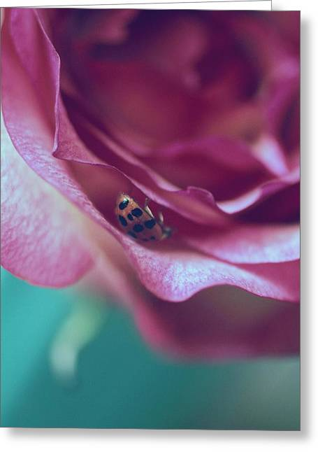 Quiet Lady Greeting Card by The Art Of Marilyn Ridoutt-Greene