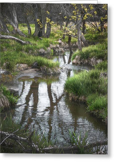 Quiet Stream Greeting Card by Scott Norris