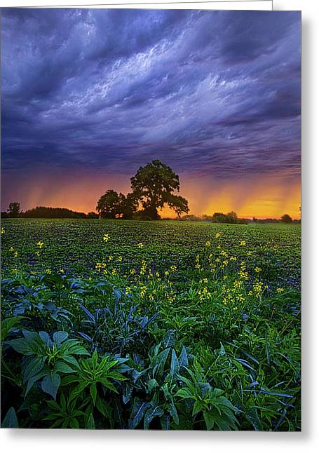 Quietly Drifting By Greeting Card by Phil Koch