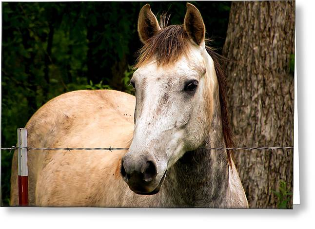 Surreal Fantasy Horse Fine Art Greeting Cards - Quietly Waiting Greeting Card by Karen M Scovill