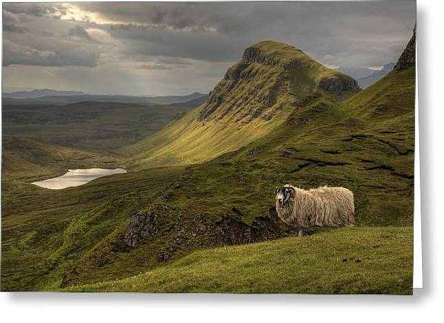 Blackface Greeting Cards - Quiraing Sheep Greeting Card by Wade Aiken