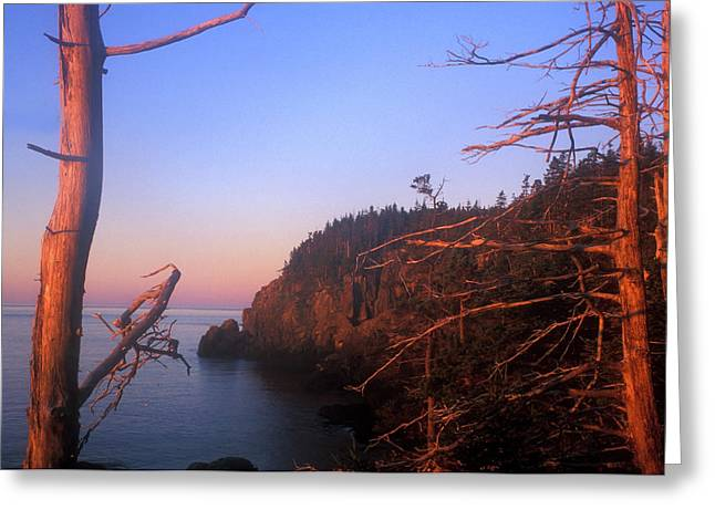 Lubec Greeting Cards - Quoddy Head Ocean Cliffs Greeting Card by John Burk