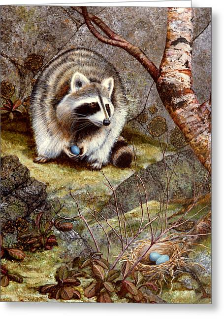 Raccoon Found Treasure  Greeting Card by Frank Wilson