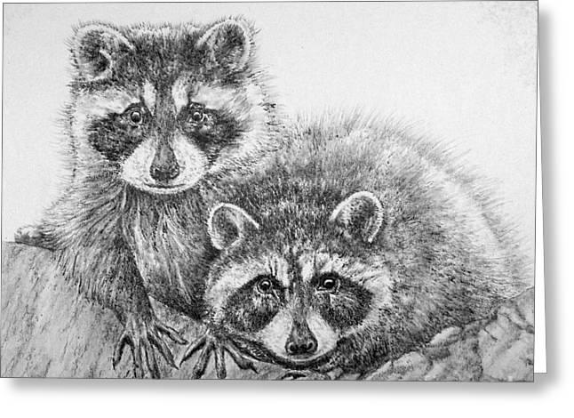 Kaelin Drawings Greeting Cards - Raccoon Pals Greeting Card by Roy Kaelin