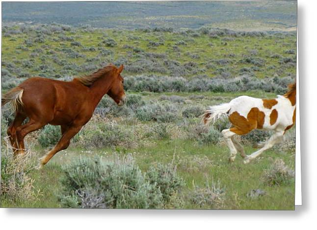Race Horse Greeting Cards - Racing my mom Greeting Card by Darlene Grubbs