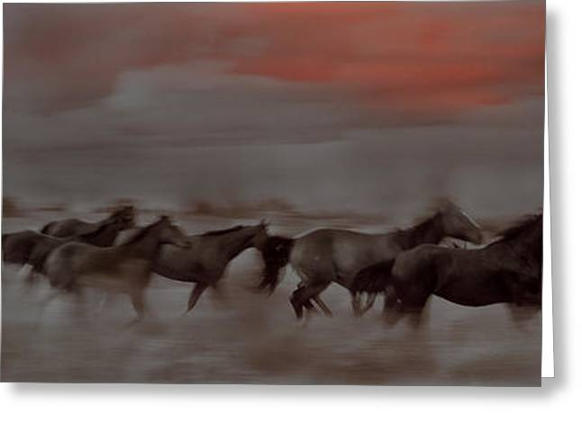 Race Horse Greeting Cards - Racing The Moon Greeting Card by Martha Weaver