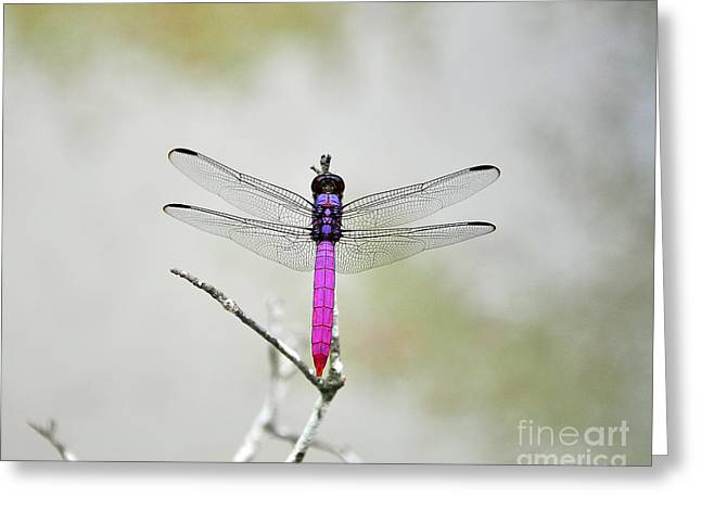 Dragon Fly Photo Greeting Cards - Radiant Roseate Greeting Card by Al Powell Photography USA