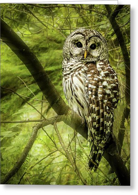 Radiating Barred Owl Greeting Card by Jean Noren