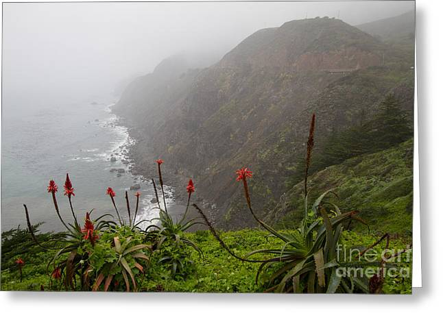 Big Sur Ca Greeting Cards - Ragged Point #1 Greeting Card by Dan Hartford