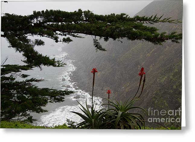Big Sur Ca Greeting Cards - Ragged Point-2 Greeting Card by Dan Hartford