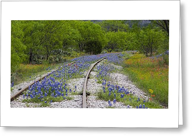 Field Rocks Greeting Cards - Railway Wildflowers Greeting Card by Stephen Stookey