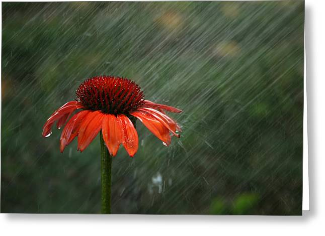Thrive Greeting Cards - Rain Greeting Card by Darren Fisher