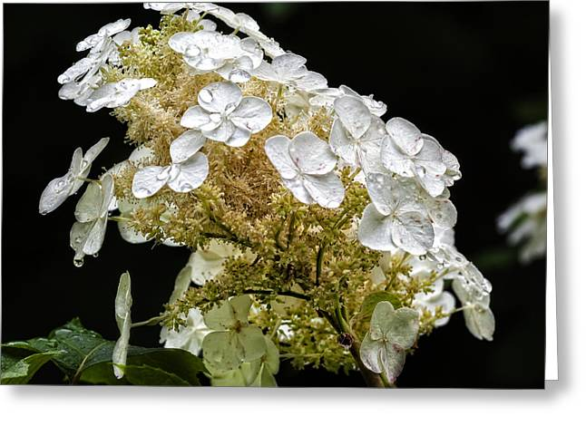 Rain Drop Greeting Cards - Rain Drops and Flowers Greeting Card by Robert Ullmann