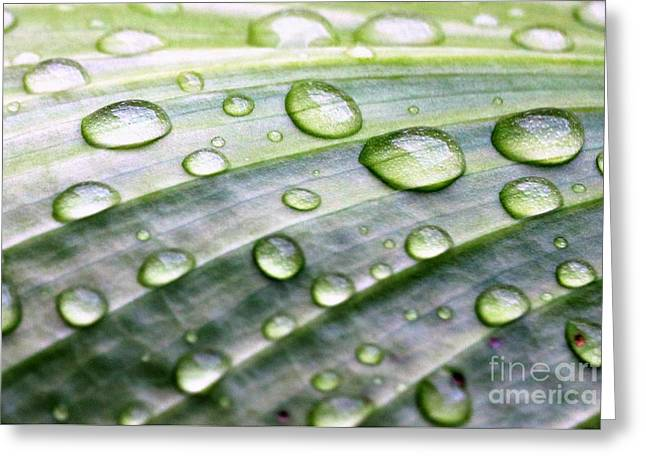 Rain Drops On A Leaf Greeting Card by Diann Fisher