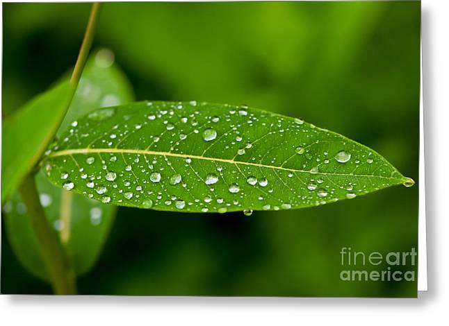 Raining Greeting Cards - Rain drops on Leaves #1 Greeting Card by Kerri Farley