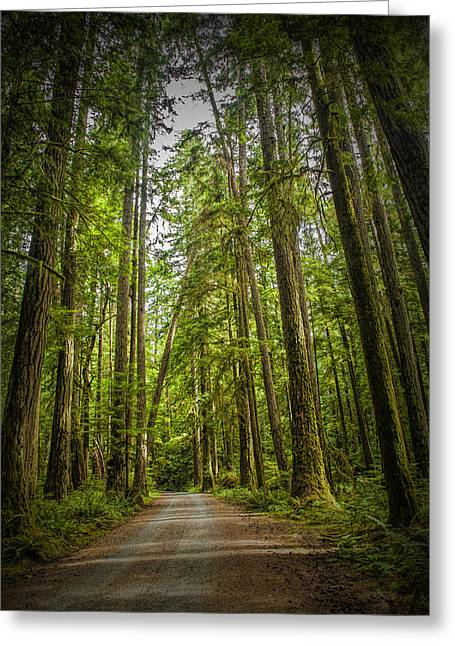 Rain Forest Dirt Road Greeting Card by Randall Nyhof