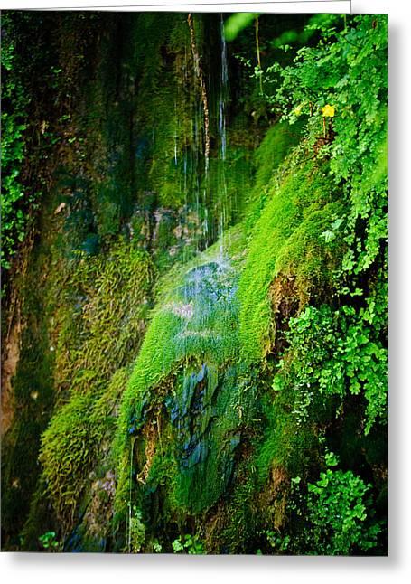 Rain Forest Greeting Card by Louis Dallara